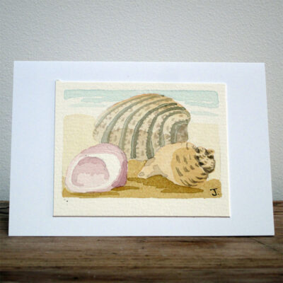 Shells - Original Watercolour Painting by Jessica Coote
